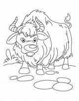 Yak Coloring Clipart Everest Vbs Sheet Sheets Ox Cartoon Mount Drawing Growling Webstockreview Popular Template sketch template
