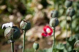 Photos of U.S. and Afghan Troops Patrolling Poppy Fields ...