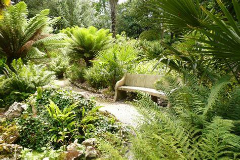ferns in the garden ferns ferns garden and tree fern on pinterest