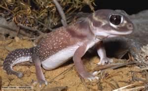 The Geckos For Sale Petco {Forum Aden}