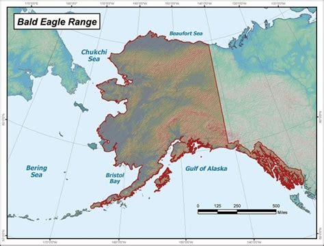 bureau rangé fish eagle range