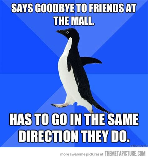 Funny Penguin Memes - 301 moved permanently