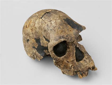 L'Homo habilis compie 50 anni - Wired