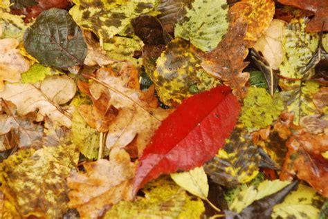 tapis de feuilles mortes tapis de feuilles mortes si nos yeux 233 taient un appareil photo