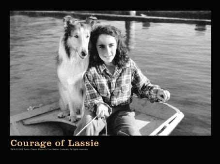 Courage of Lassie (1946) Cast and Crew, Trivia, Quotes ...