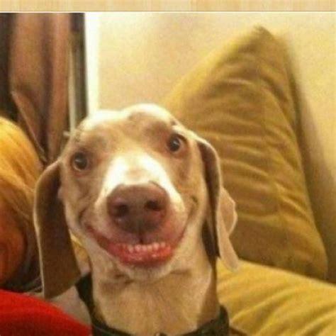 Smile Meme - big smile doggie blank template imgflip