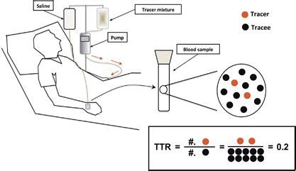 applications  stable nonradioactive isotope tracers