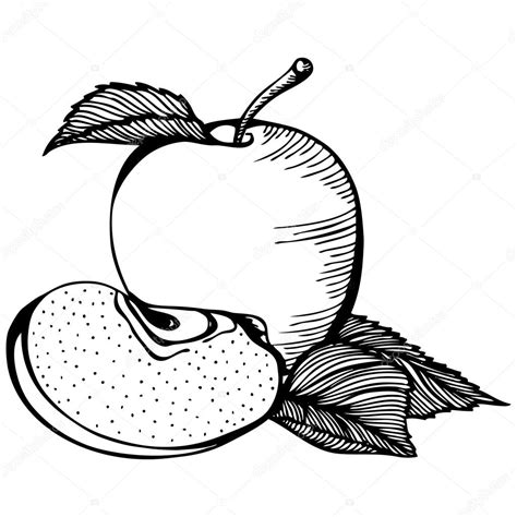 disegni da colorare bianco e nero disegno bianco e nero di apple vettoriali stock 169 ennona