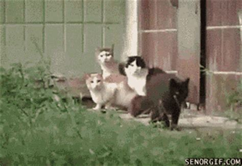 The Best Animals Being Jerks GIFs Ever Seen