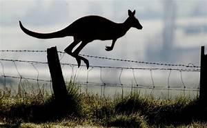 Kangaroo Fencing Design