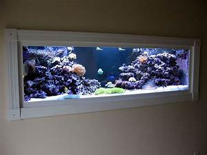 Aquarium In Wand : aquarium ingebouwd in wand met stelling fish tank pinterest wall aquarium aquarium en sea ~ Orissabook.com Haus und Dekorationen