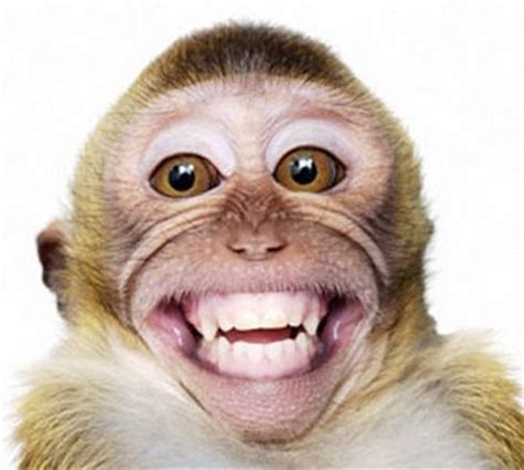 hd animals wallpapers smiling monkey pictures baby