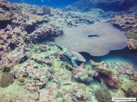 The Dive Ao Nang by Hawksbill Turtle Picture Of The Dive Ao Nang Ao Nang