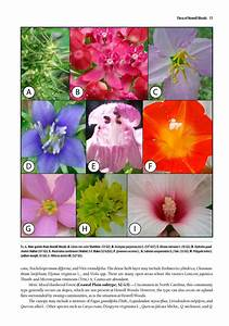 Guide To The Vascular Flora Of Howell Woods  U2013 Shop Brit