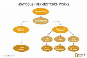 How The Fermentation Process Works In Bread Dough