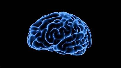 Brain Human Royalty Medical Degree Footage