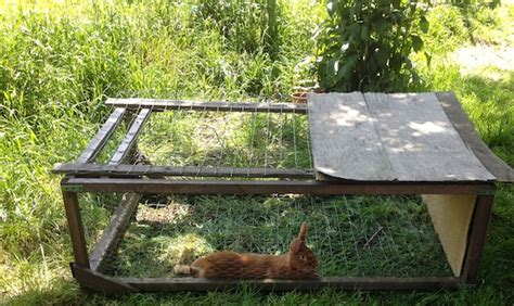 comment 233 lever vos lapins 224 la maison