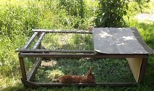 Maison Pour Lapin : construire enclos lapin ak47 jornalagora ~ Premium-room.com Idées de Décoration