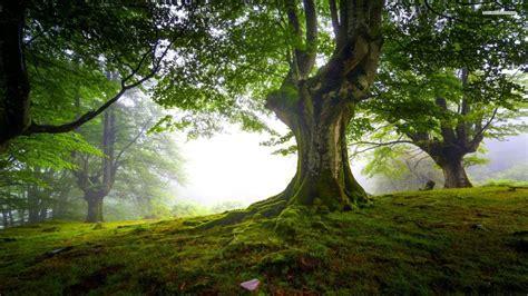 Beautiful Tree Wallpaper For Desktop by Tree Wallpaper Hd