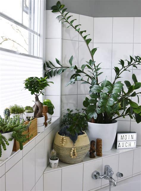 Kleine Badezimmer Pflanzen by Licht F 252 R Den Jungle Kleines Badezimmer Makeover