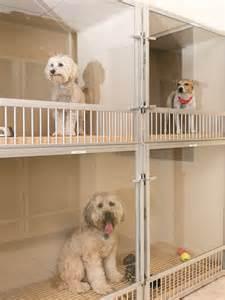 Dog Boarding Doggie Daycare