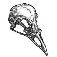 Animal Skull Biro Drawing Structure Project Kat