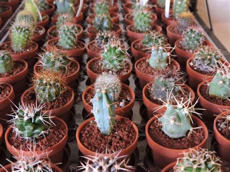 plantas miniatura plantas suculentas cactus 12 00 en