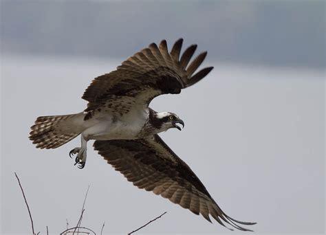wing span photograph by glenn lawrence