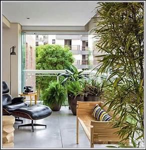 Pflanzen Sichtschutz Balkon : hohe pflanzen als sichtschutz balkon balkon house und dekor galerie m2wr5ebkxj ~ Eleganceandgraceweddings.com Haus und Dekorationen