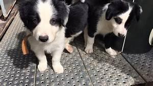 Vente Animaux Entre Particulier : une nouvelle r glementation pour la vente d 39 animaux domestiques entre particuliers ~ Medecine-chirurgie-esthetiques.com Avis de Voitures
