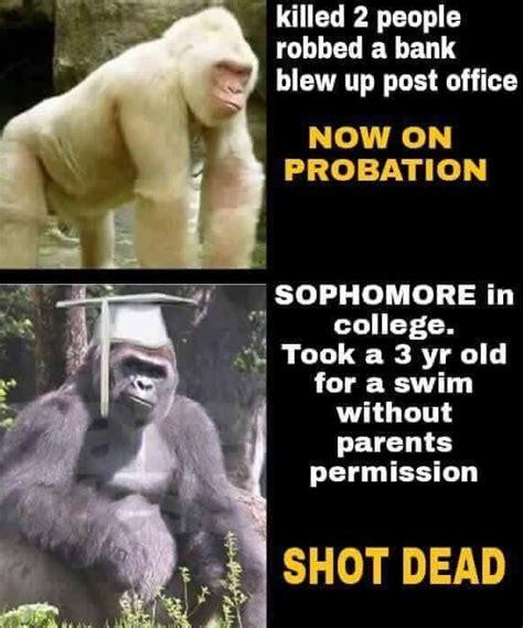 Best Harambe Memes - cincinnati zoo wants the harambe memes to stop tigerdroppings com