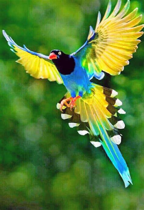 beautiful bird nature  lets