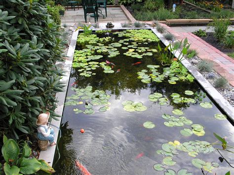 koi pond ideas big koi fish pond design ideas home trendy