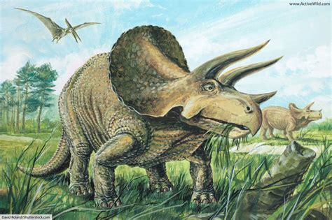 Triceratops Facts For Kids Students Adults Information