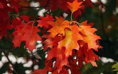 Leaves Autumn October 4k Background Ultra