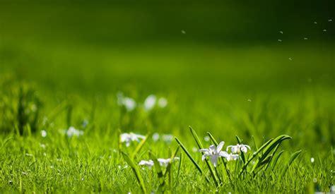 fondos de pantalla agua cesped verde primavera ver pradera prado paisajes flor