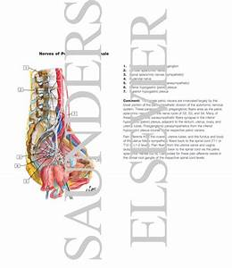 Innervation of Internal Genitalia Nerves of Pelvic Viscera ...