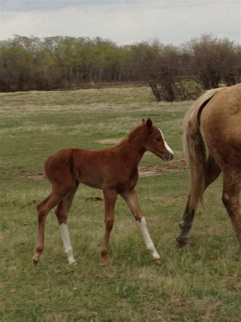 barn dream horse appaloosa exciting thoroughbred thoroughbreds than year