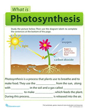 photosynthesis for kids worksheet education