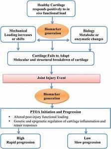 Biomarkers of PTA | SpringerLink