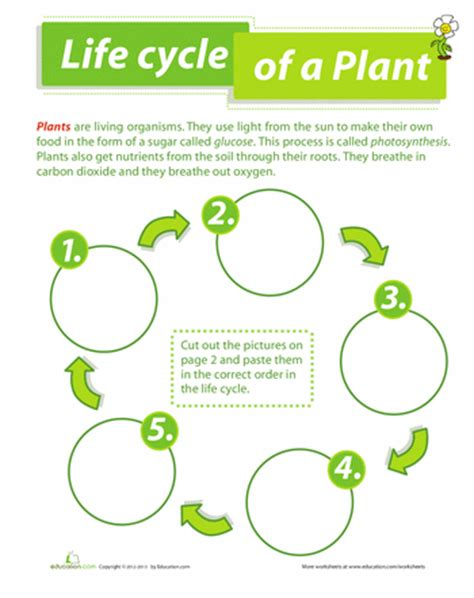cycle of a plant worksheets cycling and plants