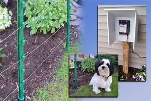 an electric fence a different approach to dog training With best electric dog fence