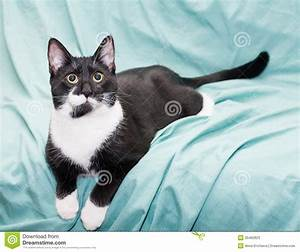 Cute Black And White Kittens With Green Eyes Hd Warrior ...
