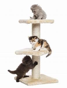 Arbre À Chat Pas Cher : arbre a chat marseille ~ Nature-et-papiers.com Idées de Décoration