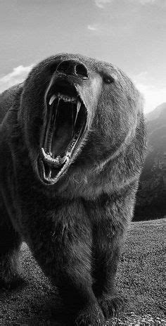 11 Best Grizzly bear drawing images in 2019   Bear drawing, Bear art, Wildlife paintings