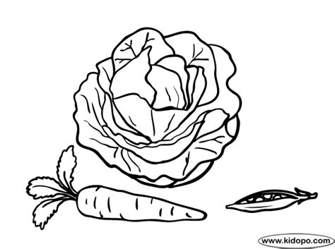 Cabbage 1 Coloring Page