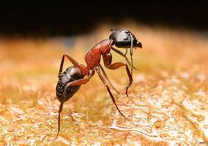 Photoshop Guide - The Making Of Eye-ant