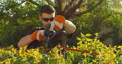 Hedge Trimmer Trimming Trim Cutting Thick Inch