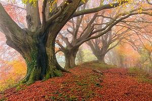 Autumn, Fog, Forest, Wallpapers, Hd, Desktop, And, Mobile