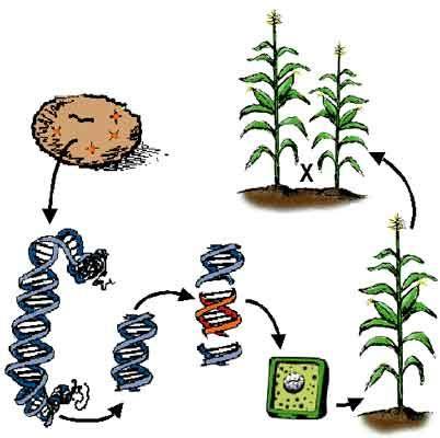 plant  soil sciences elibrary